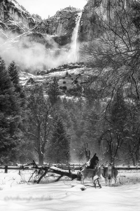 Silence of Snow